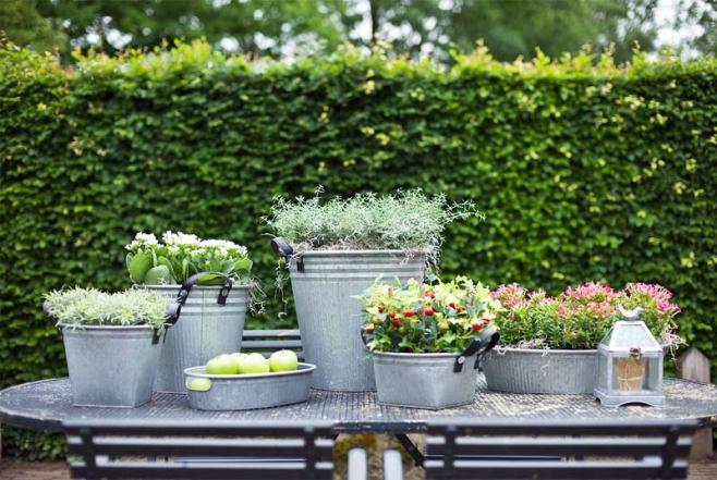 dekorieren und bepflanzen vom feinsten mit zink. Black Bedroom Furniture Sets. Home Design Ideas